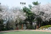 성남 벚꽃길 수진공원 13일 벌터산 축제